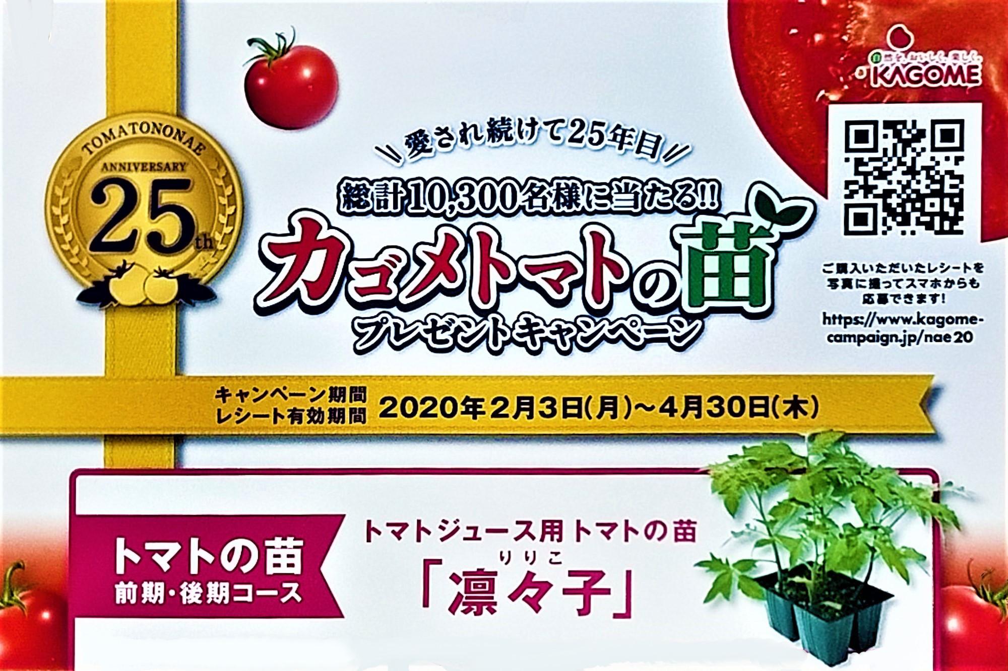 カゴメトマトの苗5
